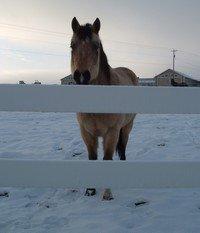 horses-006