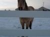 thumbs_horses-006