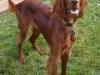 thumbs_kjm-dogs-011